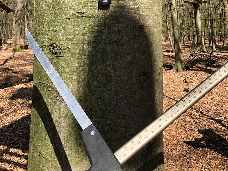 Messung der Bäume im Hochseilgarten-Hasloh