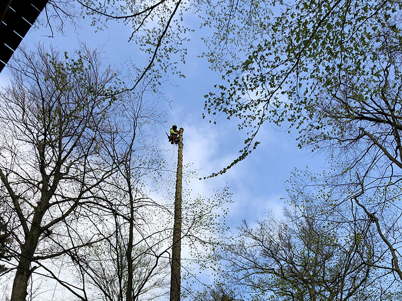 Baumpflege Pieper im Hochseilgarten-Hasloh